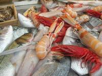pesci in esposizione - La Cambusa - 31 ottobre 2010  - Castellammare del golfo (1715 clic)