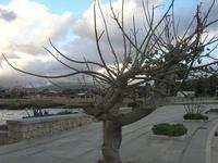 LIDO VALDERICE - lungomare - 12 dicembre 2010  - Valderice (1303 clic)