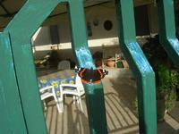 farfalla sul cancello - 2 dicembre 2010  - Alcamo (1345 clic)