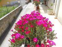 vasi con fiori: è primavera! - 19 aprile 2010  - Alcamo (2055 clic)