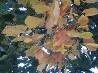 autunno piemontese - 18 ottobre 2011  - Alcamo (705 clic)