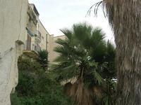 case e palme - 31 ottobre 2010  - Castellammare del golfo (1098 clic)