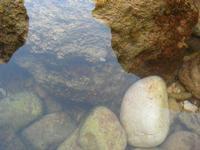 vita sugli scogli all'Isulidda - granchio - 24 agosto 2010  - Macari (1799 clic)