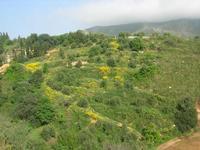 C.da L'Acqua La Vite - panorama - 25 aprile 2010  - Castellammare del golfo (1504 clic)