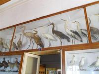 Museo Ornitologico - 19 settembre 2010  - Mazara del vallo (1343 clic)