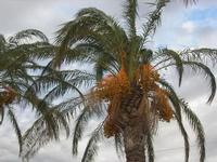 palme sulla spiaggia - 31 ottobre 2010  - San vito lo capo (1330 clic)
