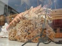 spugna, aragosta e conchiglie in vetrina - 31 ottobre 2010  - San vito lo capo (1399 clic)