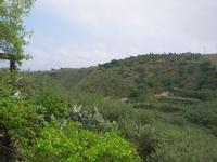 C/da L'Acqua La Vite - panorama - 25 aprile 2010  - Castellammare del golfo (1256 clic)