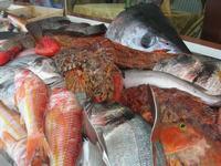 pesci in vetrina - La Cambusa - 12 febbraio 2011  - Castellammare del golfo (1501 clic)