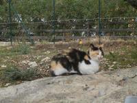 gatto - 9 ottobre 2011  - Scopello (855 clic)