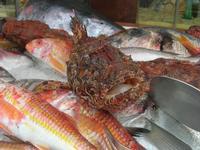 pesci in vetrina - La Cambusa - 12 febbraio 2011  - Castellammare del golfo (1486 clic)