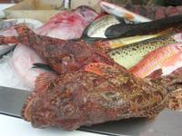 pesci in vetrina - La Cambusa - 12 febbraio 2011  - Castellammare del golfo (1542 clic)