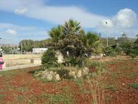 giardino sul lungomare - 2 giugno 2010  - Cornino (2399 clic)