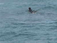 surf - Baia di Cornino - 9 ottobre 2011  - Cornino (1216 clic)