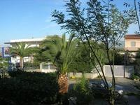 alberi in cortile - 10 novembre 2010  - Alcamo (1333 clic)
