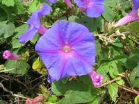 flora - 2 giugno 2010  - Calatafimi segesta (2232 clic)