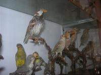 Museo Ornitologico - 19 settembre 2010  - Mazara del vallo (1005 clic)