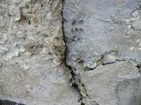 formicaio - formiche con le ali - 28 giugno 2011  - Alcamo (788 clic)