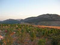 Tempio e zona archelogia da c/da Monte Barbaro Piccolo - 26 giugno 2010  - Segesta (3112 clic)