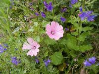 flora - 23 aprile 2011  - Scopello (1172 clic)