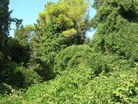Monte Bonifato - Riserva Naturale Orientata Bosco d'Alcamo - 25 luglio 2010   - Alcamo (1083 clic)