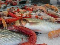 pesci in esposizione - La Cambusa - 18 luglio 2010  - Castellammare del golfo (2794 clic)