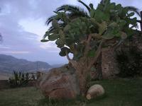 giardino e panorama - Baglio Strafalcello - 22 giugno 2010  - Castellammare del golfo (1355 clic)