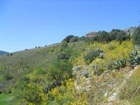 zona archeologica e tempio - 10 aprile 2011  - Segesta (1685 clic)