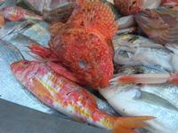 pesci in esposizione in un ristorante del porto - 14 marzo 2010  - Castellammare del golfo (3025 clic)