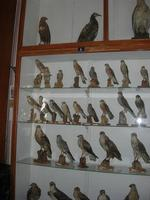 Museo Ornitologico - 19 settembre 2010  - Mazara del vallo (1338 clic)