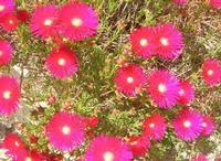 fiori - 16 aprile 2010   - Alcamo (2444 clic)