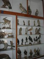 Museo Ornitologico - 19 settembre 2010  - Mazara del vallo (1276 clic)