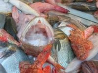 pesci in esposizione in un ristorante del porto - 14 marzo 2010  - Castellammare del golfo (3113 clic)