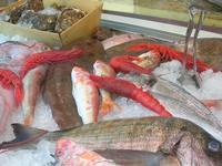pesci esposti in vetrina - La Cambusa - 3 aprile 2011  - Castellammare del golfo (1303 clic)