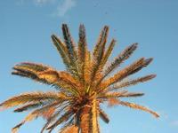 palma - 6 gennaio 2011  - Sciacca (1540 clic)