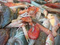 pesci in esposizione in un ristorante del porto - 14 marzo 2010  - Castellammare del golfo (3647 clic)
