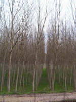 Natura allineata  - Caltagirone (3126 clic)