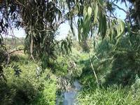 Foce del fiume Alcantara Vegetazione foce fiume Alcantara  - Fiumefreddo di sicilia (1737 clic)