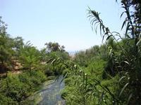 foce del fiume Alcantara vegetazione alla foce del fiume Alcantara  - Fiumefreddo di sicilia (1670 clic)