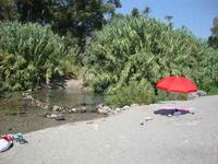 Foce del fiume Alcantara vegetazione alla foce del fiume Alcantara  - Fiumefreddo di sicilia (2812 clic)