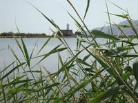 Il faro tra le canne     - Santa marina (4313 clic)