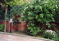 Il giardino di Studio 71 alcune varietà di piante fiorite di Studio 71 Plermo PALERMO Maria Calvarus