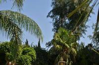 vegetazione intorno alla piscina dell'hotel Garden   - San giovanni la punta (2020 clic)
