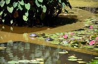 Tartarughe tra le ninfee La foto è stata scattata all'Orto Botanico di Palermo nella grande vasca PA