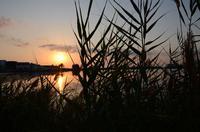 Alba tra le canne La foto è stata scattata a Lingua. Il sole si alza alle spalle del laghetto.    - Santa marina (3200 clic)