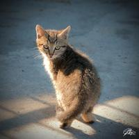Gattino al sole un gattino si gode il sole di gennaio a barcarello vicino al molo  - Sferracavallo (3993 clic)