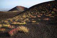 L'Etna in fiore (716 clic)