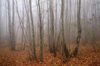 Il bosco incantato (684 clic)