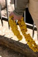 I fiori di Maggio MAZZARINO Giuseppe Cirignotta