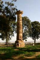 La colonna dorica  - Gela (25188 clic)